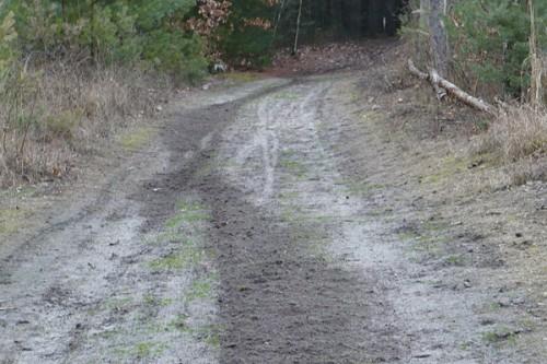 Motorkáři v lesích...