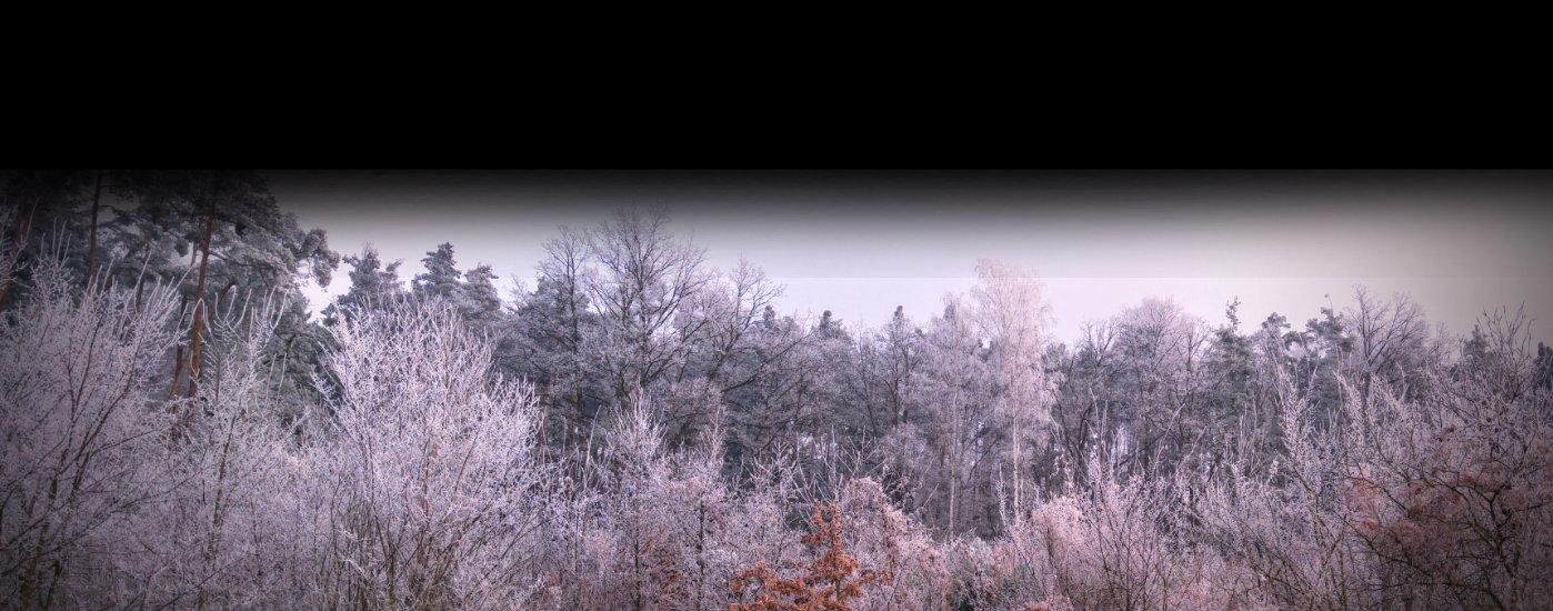 Kouzla zimní přírody